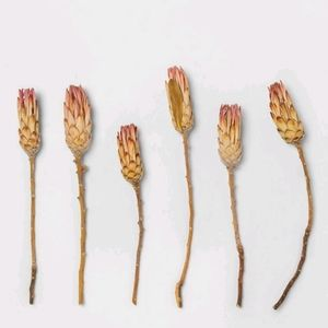 Smith & Hawken Dried Protea Compacta Flower Pink